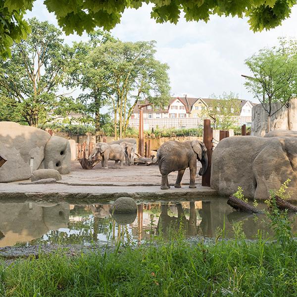 Neubau Elefantenanlage Zoo, Basel